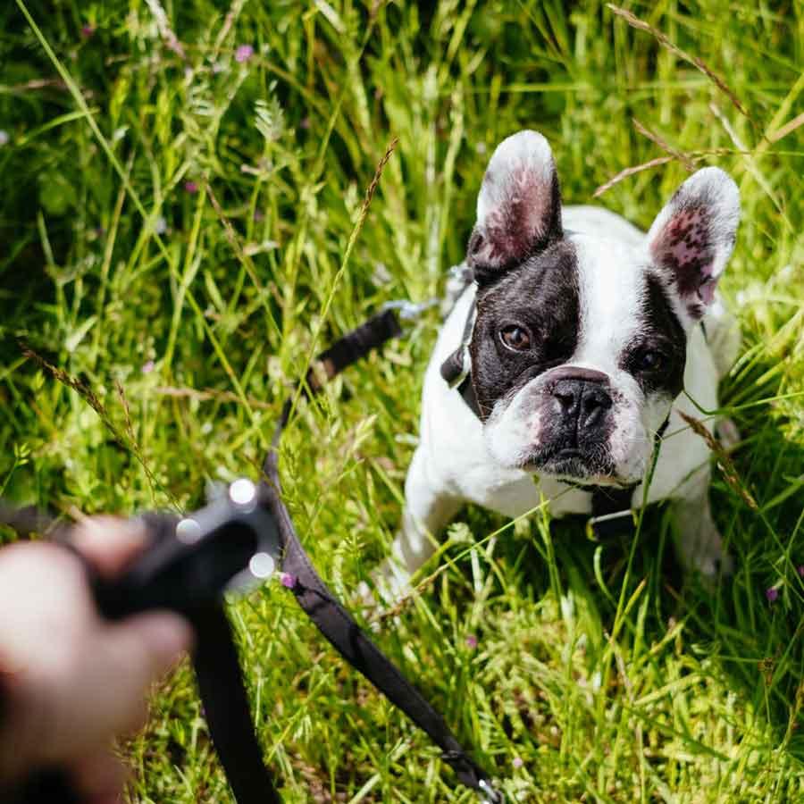 Dog Behaviourist Brisbane Qld
