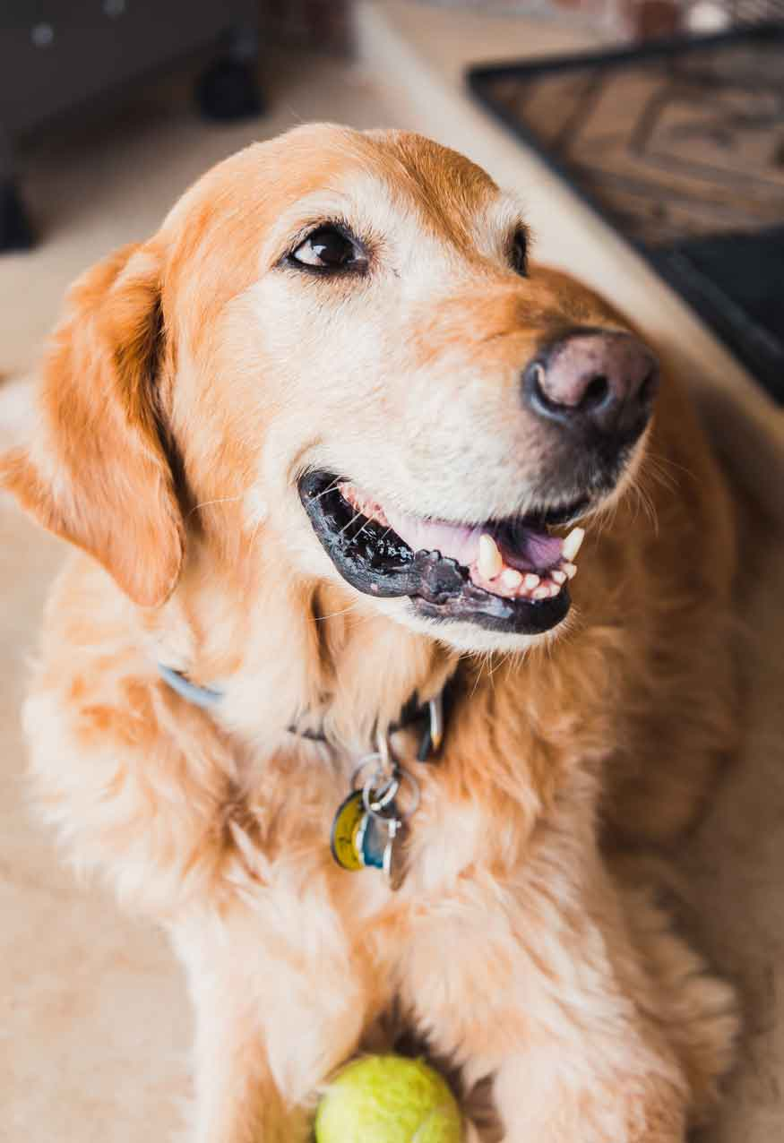 Dog Behaviourist Samford