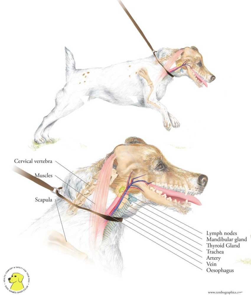 Dog Harness Design Samford