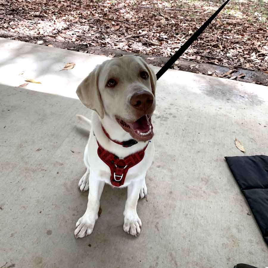 Dog Trainer Ferny Hills