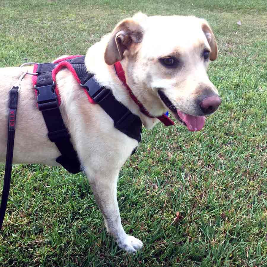Perfect Fit Harness Ergonomic Dog